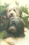 gypsy &  jack
