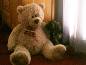 Coby_and_Teddy_Bear_1